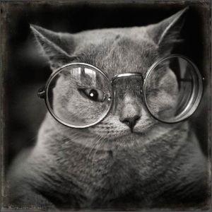 kucing lucu (11)