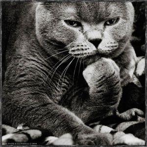 kucing lucu (15)