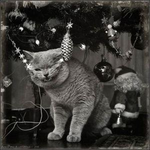 kucing lucu (16)