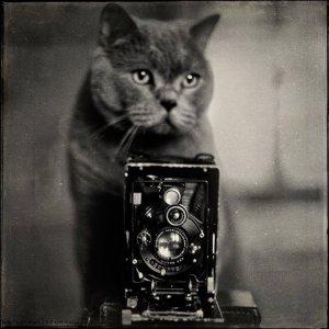 kucing lucu (17)