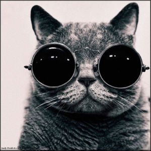 kucing lucu (2)