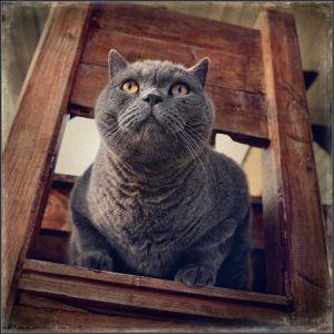 kucing lucu (21)
