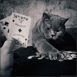 kucing lucu (8)